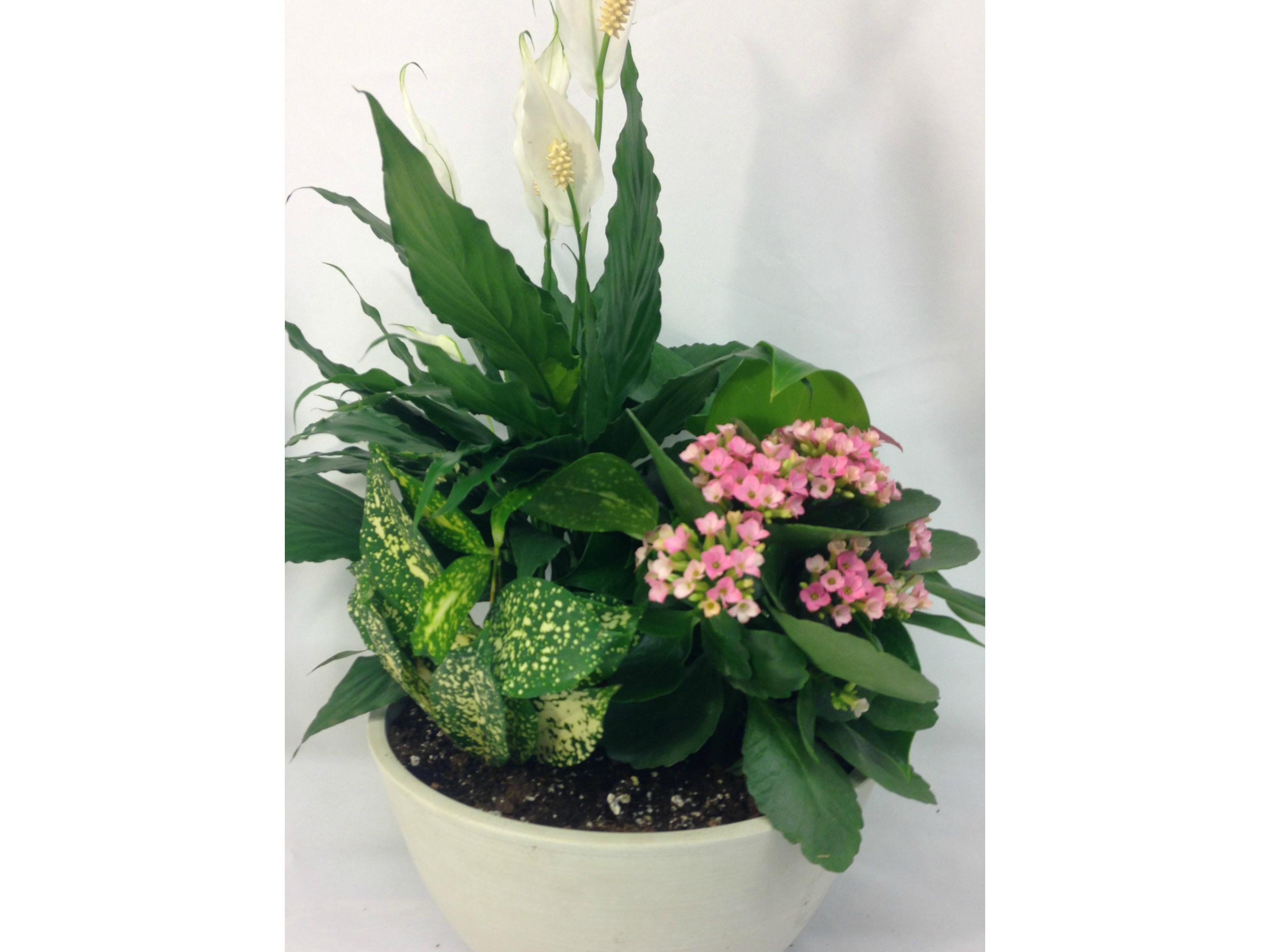 Plantes et jardin de plantes DuCharme En Fleurs
